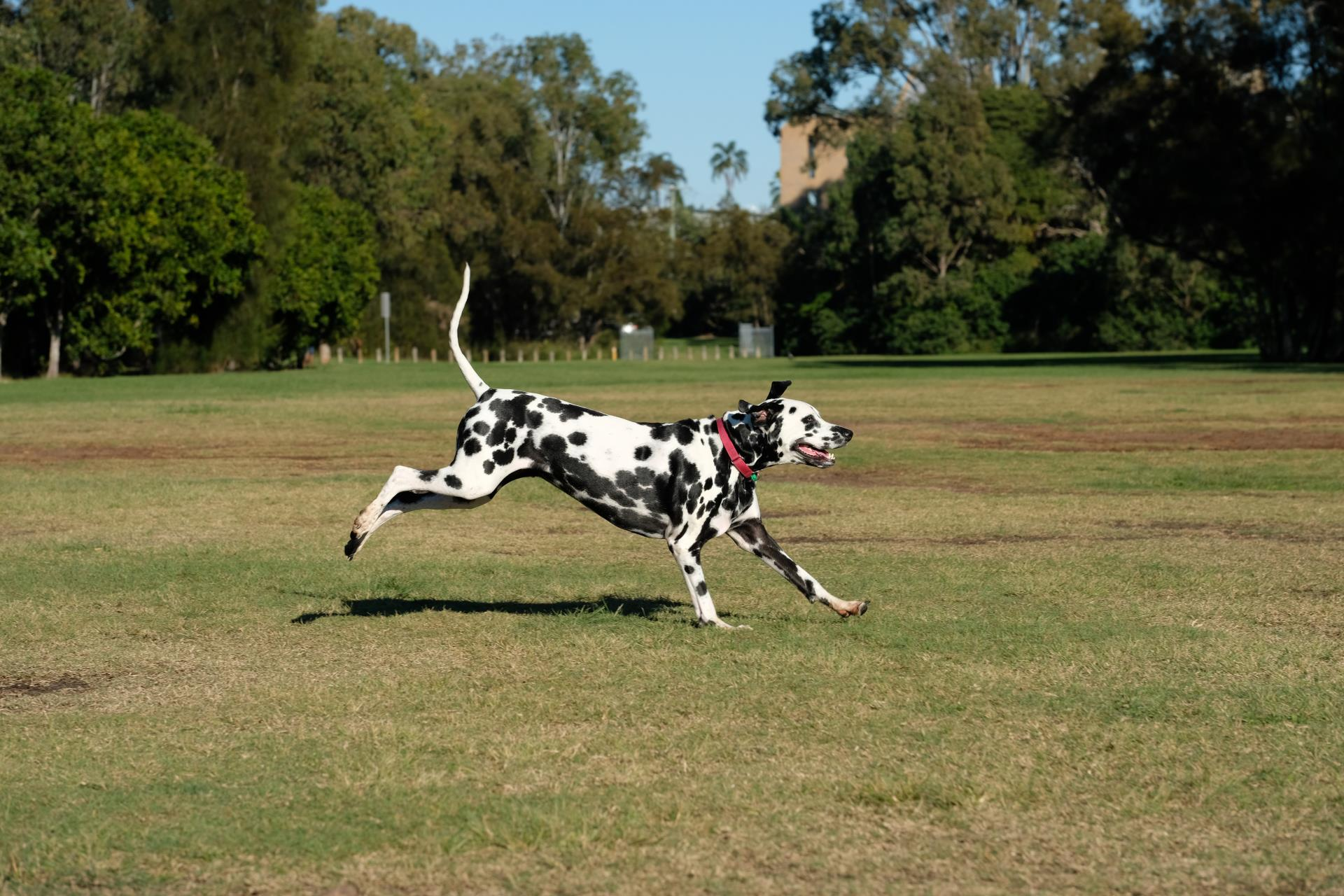Temporary Off-leash Dog Park Endorsed for Marie Marland Reserve